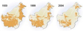 Changements dans la répartition de l'orang-outan à Bornéo entre 1930 et 2004 Source : WWF