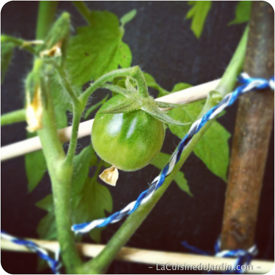 lacuisinedujardin-photo-9-tomate-sur-plan